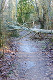 Tree on trail. A tree has fallen over the hiking trail and is a hindrance stock photos