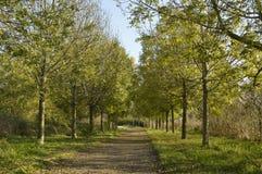 Tree trail. Outdoor walk near home on italy Royalty Free Stock Photo