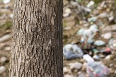 Tree in the trash Royalty Free Stock Images