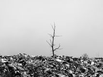 Tree on the trash. Royalty Free Stock Images