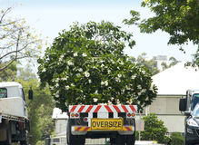 Tree travelling on truck stock photography