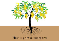 Tree, Tree with leaves and golden money symbol is the fruit of tree,with roots vector illustration Stock Photo