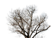 Tree. The trees are bare in winter Royalty Free Stock Photo