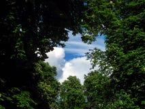 Tree, Trees, Park, Sky, Heaven Stock Photos