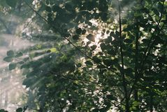 sun rays through the leaves stock image