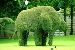 The tree is trimmed into elephants. The tree is trimmed to the shape of an elephant Stock Photography
