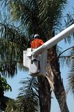 Tree Trimmer Royalty Free Stock Photos