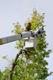 Tree Trimmer. Man in cherry picker trimming large tree Stock Photo
