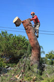 Tree trimmer cutting down pine tree Stock Photography