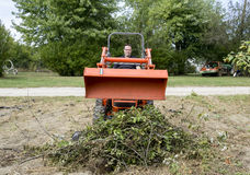 Tree Trimmer Dumping Load Of Tree Limbs Stock Image