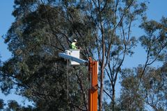 Tree trimmer sawing branches in bucket lift at work Royalty Free Stock Photography