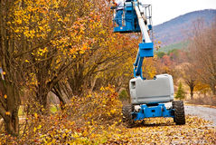 Tree Trimming Stock Images