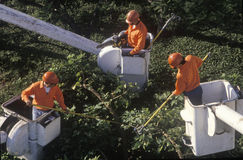 Tree-trimming crew Stock Image