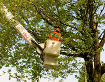 A tree-trimming operation in canada Royalty Free Stock Image