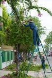 Tree trimming, Vietnam Royalty Free Stock Photo