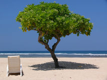 Tree on tropical beach stock images