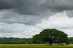 Tree in tropical landscape Stock Photos