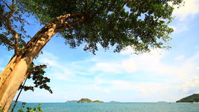 Tree on Tropical Sea. Island on Tropical Sea, Chumphon Thailand stock video footage