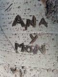 Tree truck written. Ana y Mon stock photo