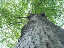 Free Tree Trunk Stock Photography - 102337382