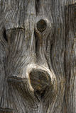 Tree Trunk. Close-up of tree trunk with cut limbs Royalty Free Stock Image