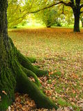 Tree Trunk. Surrounded by autumn leaves Stock Photos