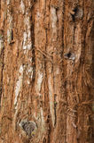 Tree Trunk. Rough texture of a tree trunk royalty free stock image