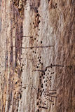 Tree Trunk Abstract. Natural abstract texture of an old  tree trunk royalty free stock photography