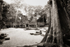Tree trunk at Angkor temple Royalty Free Stock Images