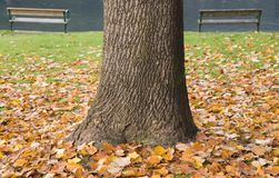 Tree trunk and autumn leaves Stock Images
