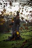 Tree trunk. Autumn nature in Dublin, Ireland Stock Photos