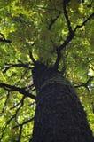 Tree trunk in an autumn season. Stock Photos