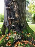 Tree trunk at Autumn time. Pretty tree trunk with fungi, moss and autumn leaves Royalty Free Stock Photography