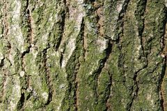 Tree trunk background Royalty Free Stock Photo