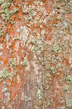 Tree trunk background. Textured abstract background provided by a tree trunk Stock Images
