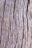 Tree Trunk Background Royalty Free Stock Photos