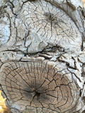 A  tree trunk background Royalty Free Stock Images
