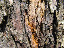 Tree trunk Stock Photography