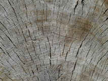 Tree trunk Stock Image