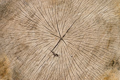 Tree trunk Background royalty free stock photography