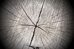 Tree trunk Background royalty free stock images
