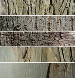 Tree trunk banner set Stock Image