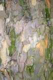 Tree trunk bark. Weathered and moss covered bark on tree trunk Royalty Free Stock Images