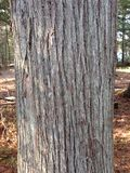 Tree trunk. Bark medium Stock Image