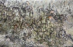 Tree trunk bark Royalty Free Stock Photos