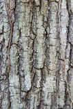 Tree trunk bark texture Royalty Free Stock Photos