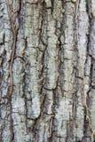 Tree trunk bark texture Royalty Free Stock Photos