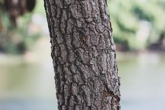 Tree trunk and bark texture, pattern natural detail royalty free stock photography