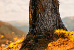Tree trunk Royalty Free Stock Image