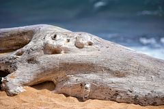 Tree trunk on the beach Stock Images
